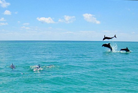 key west dolphins leaping