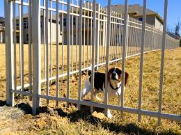 Home Fencing for dogs