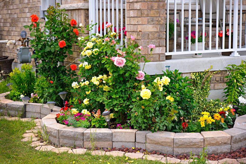 Beautiful Plants for Your Garden